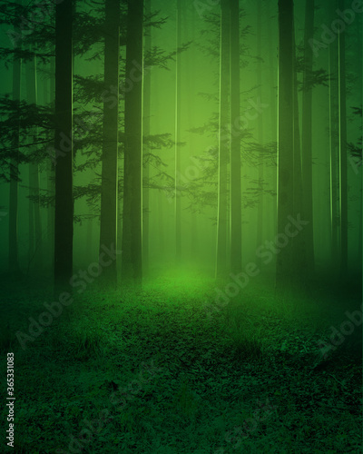 Deep Woods Background