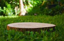 Garden Podium Tree Trunk Green Background