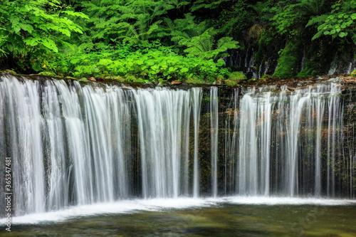 Fototapety, obrazy: 軽井沢 白糸の滝