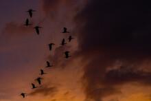 Flock Of Birds Flying Away Sil...