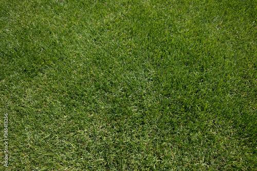 Photo of the beautiful green grass texture Slika na platnu