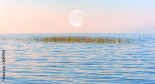 Fototapeta Calm water of Lake shore with tall sedge with full moon at sunset