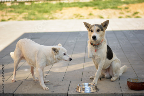 Photo Handicapped dogs on village yard