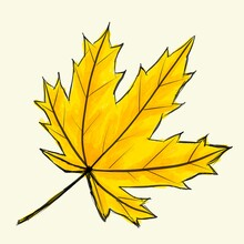 Digital Sketch Maple Leaf. Black Doodle Outline And Yellow Colored Foliage Isolated On White. Watercolor Imitation Bright Dark And Light Colors With Stains. Natural Product