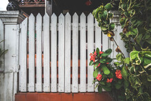 White Wooden Fence With Red Flowers. Red Hibiscus Flowers And White Wooden Fence.
