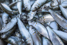 Fresh Caught Sardines On A Fis...