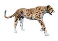 3D Rendering Big Cat Cheetah O...