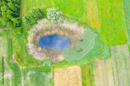 Aerial view of natural pond surrounded by pine trees. Europe Wallpaper Mural