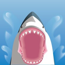 Shark With Opened Mouth