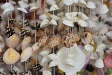 Close-up Of Shells Used As Home Decorations