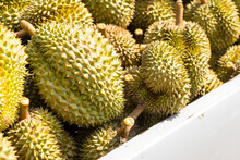 Heap Of Durian On Pickup.