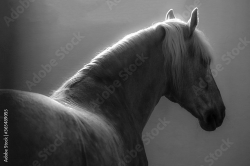 Fototapeta Fragment of the head of a horse, side view. obraz