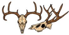 Dear Skull Vector Illustration