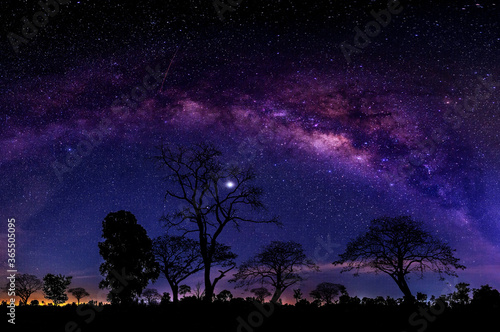 Fototapeta Night starry sky with purple milky way and old tree in forest dark night landscape