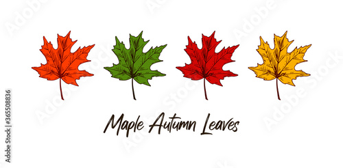 Set of hand drawn multicolored autumn maple leaves isolated on white background Canvas