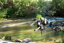 Logjam In The Cimarron River I...