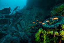 School Of Fish Around The Shipwreck