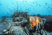 School Of Fish Around The Ship...