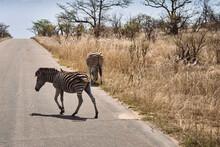 Zebra Comendo
