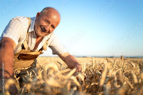 Portrait of senior farmer agronomist in wheat field checking crops before harvest Tableau sur Toile