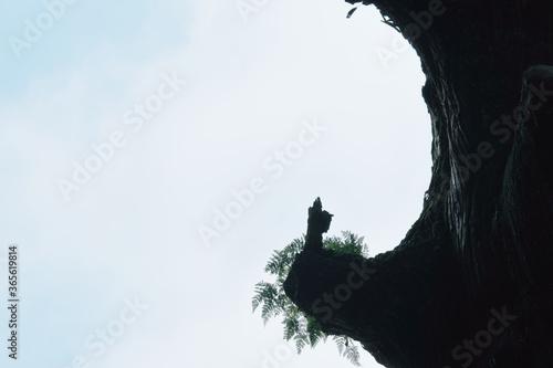 Photo 霧島神宮の御神木に宿る烏帽子を被った神官