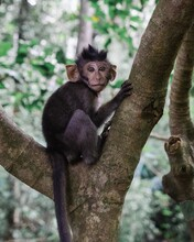 Vertical Selective Focus Shot Of A Monkey Sitting On A Branch Of A Tree In The Jungle