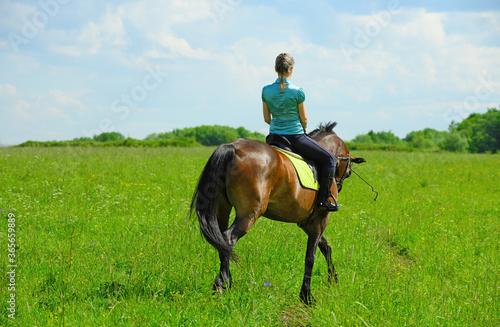 Fototapeta One Caucasian horsewoman is walking through the field, back view. obraz
