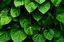 Green Organic Background.Copy ...
