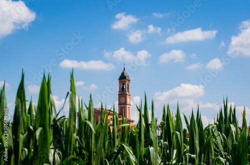 Il campanile di una chiesa che sbuca dal mais lungo la Via Francigena Wallpaper Mural
