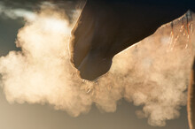 Breath Vapor From Horse Mare Backlit In Early Morning Light