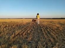 A Girl Walks With A Mastiff Do...