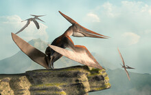 A Pteranodon Perches On A Rocky Outcropping While Two Others Fly By. One Of The Largest Flying Reptiles, These Pterosaurs Lived During The Cretaceous Period.