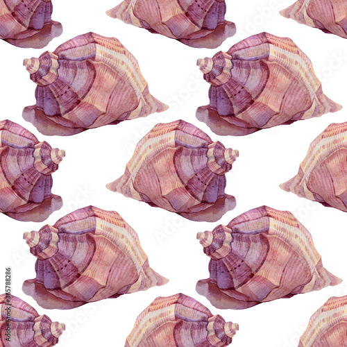Seamless pattern watercolor hand-drawn pink and brown sea shell on white background Fototapet