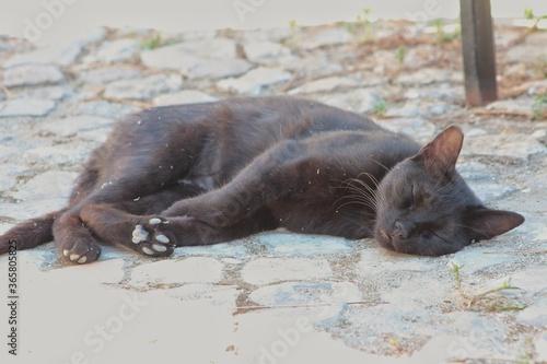 Black cat resting on the old stone road.Santa Severa Castle,Italy Canvas Print