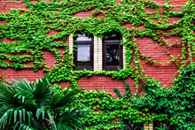 Red Brick House Overgrown With...