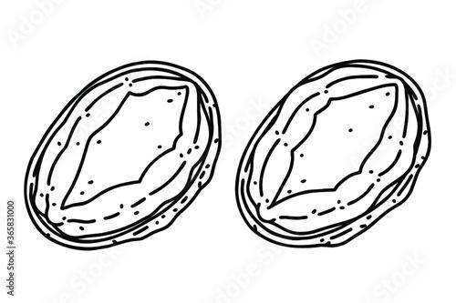 Two abalones. Vector line art illustrations set. Wallpaper Mural