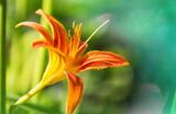 Fototapeta Kawa jest smaczna - Flowers