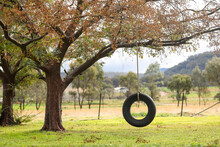 Tranquil Backyard Setting With Tyre Swing Hanging From Chinese Elm Tree