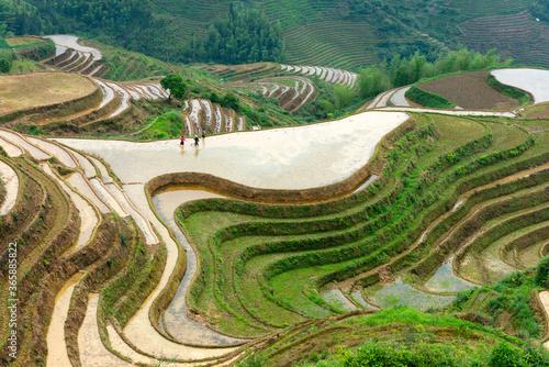 Obraz na plátně Yaoshan Mountain, Guilin, China hillside rice terraces