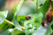 Bee Sitting On The Green Leaf ...