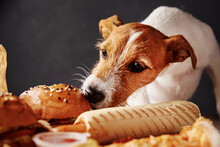 Hungry Dog Stealing Food From ...