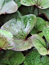 Zielone  Letnie Liście