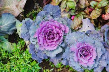Fresh Purple Ornamental Decora...