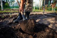 Gardener Digging In The Garden...