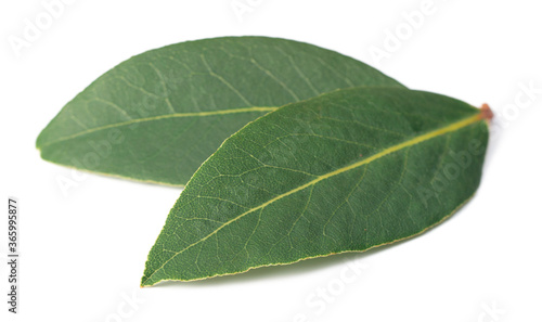 Fototapety, obrazy: fresh bay leaves isolated on the white background
