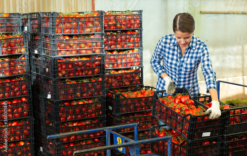 Focused female worker working at vegetable warehouse carrying box with tomatoes Tapéta, Fotótapéta