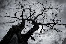 Silhouette Dead Tree On Dark D...