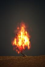 Burning Thorn Bush Christian S...