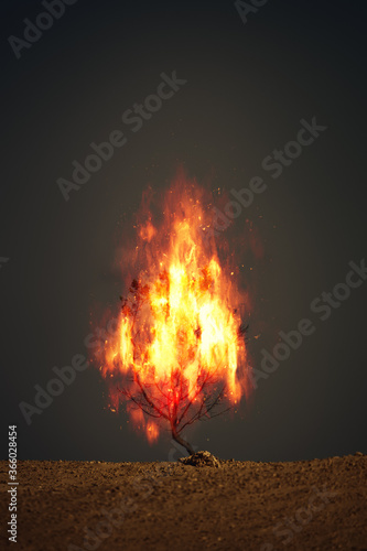 burning thorn bush christian symbol Wallpaper Mural