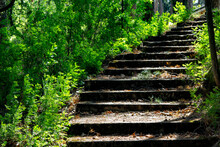 Old Steps In The Forest. Forgo...